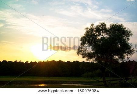 extraordinary sunset over the forest in the summer