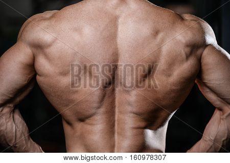 Back Muscle Man's Back
