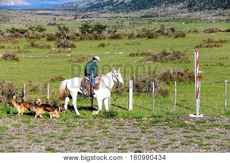 PUNTA ARENAS, CHILE-NOV. 15, 2012: Outside of Punta Arenas on the pampas of Patagonia, a gaucho on horseback tends his sheep, with sheep dogs in tow,  while riding along the fence line of the sheep ranch. This is still a traditional activity in the remote