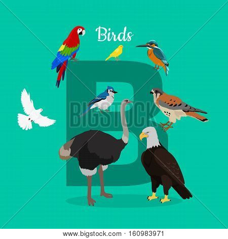 Birds with letter B isolated on green. Dove parrot eagle ostrich cockatoo hawk. Different birds kinds. Collection of aves. Part of alphabetic series with animals. ABC, alphabet. Vector in flat style.