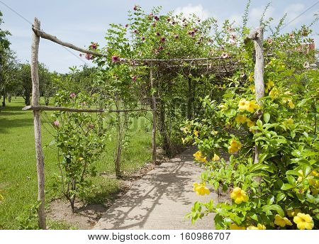 Pergola with flower in Belize City botanical garden (Belize).