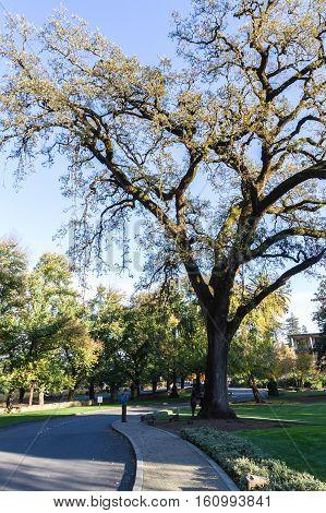 Beautiful Old Oak Tree