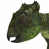 Archaeoceratops Dinosaur Head 3D Illustration - Archaeoceratops was a Ceratopsian herbivorous dinosaur that lived in China in the Cretaceous Period. poster