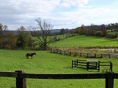 Farm landscape with fields, fences and brown horse. poster