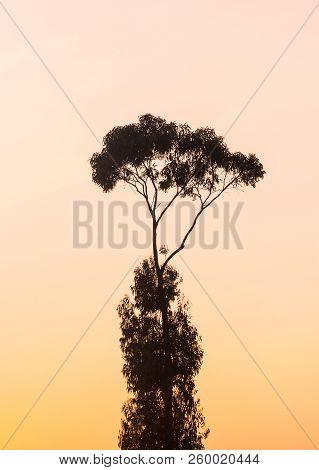 Silhouette Of A Tree Against A Sunset Sky In Estremoz In Alentejo Region, Portugal.