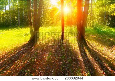 Autumn trees in sunny September autumn forest lit by evening sunshine. Colorful autumn forest landscape with sunbeams breaking through the autumn forest trees. Forest autumn nature