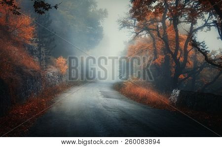 Dark Autumn Forest With Rural Road In Fog At Dusk. Fall Trees With Orange Foliage. Landscape With Wo
