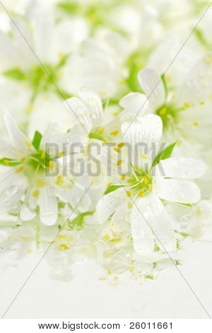 Beautiful  wild flowers  as background with small water reflection