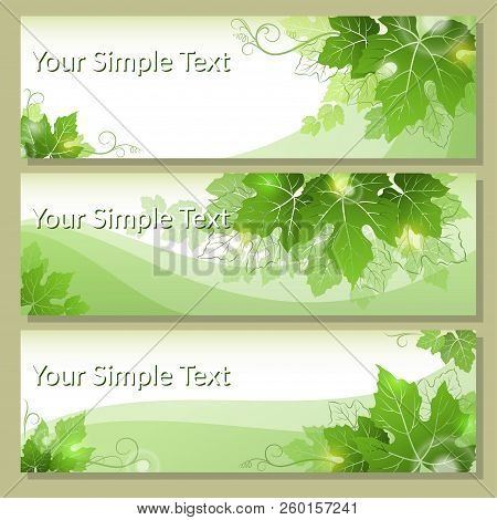 Set Of Shopping Tags, Labels, Stickers Or Business Cards With Grape Leaves, Green And Contours. Eps1