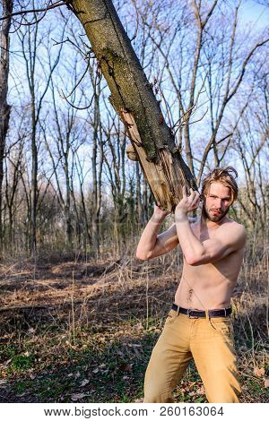 Lumberjack Or Woodman Sexy Naked Muscular Torso Gathering Wood. Masculinity Concept. Man Brutal Stro
