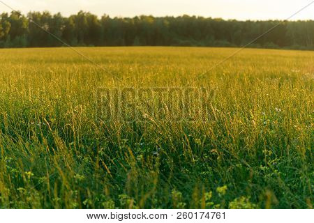 Blurred Bokeh Natural Evening Meadow In Sunset Light. Russian Nature Landscape