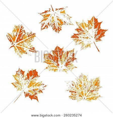 Set Of Vector Leaf Imprints. Collection Of Leaves Imprints On Transparent Background. Grunge Leaves.