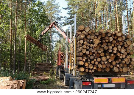 Timber Harvesting And Transportation In Forest. Transport Of Forest Logging Industry, Forestry Indus