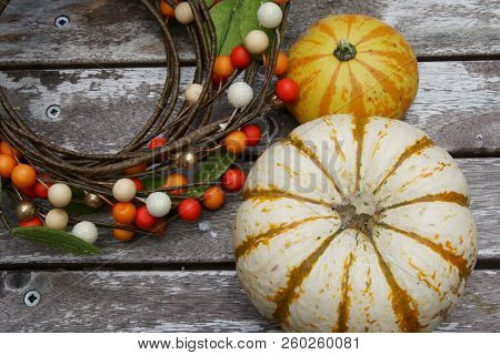 Colored Pumpkins For Fall Background With Copy Space And A Colored Fall Berries