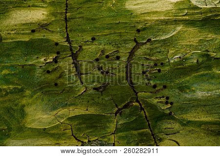 Mysterious Pine Tree Texture With Dark Mysterious Holes In The Middle