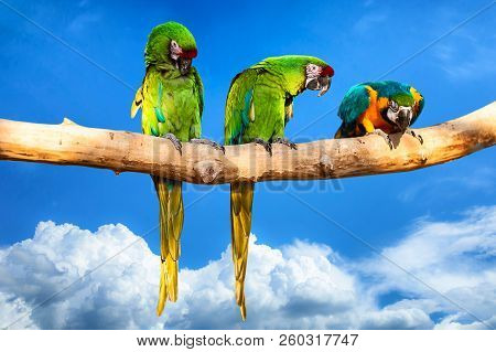 Parrots - Ara Ararauna On Tree. Tropical Vacation Concept