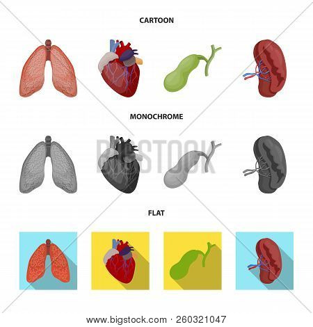 Vector Illustration Of Body And Human Icon. Set Of Body And Medical Stock Vector Illustration.