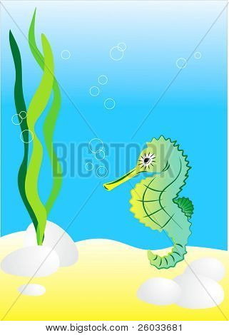 Sea-horse. Vector illustration.