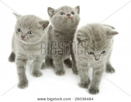 Three small funny kittens. Isolated on white background
