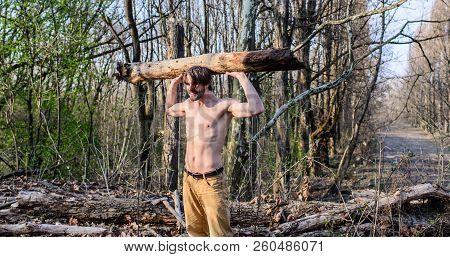 Man Beaded Brutal Sexy Lumberjack Carry Big Heavy Log. Lumberjack Or Woodman Sexy Naked Muscular Tor