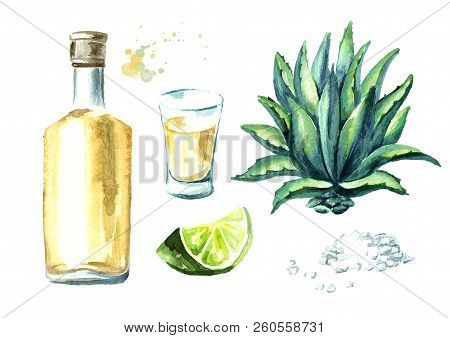 Alcohol drink Tequila set, yellow bottle of mexican cactus booze, full shot glass with slice of lime and salt, agave leaves. Hand drawn watercolor  illustration, isolated on white background poster