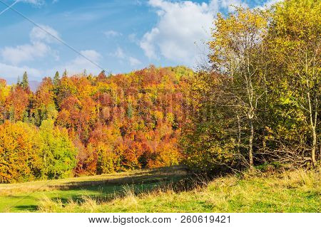 Glade In Shade Of Autumn Forest. Wonderful Sunny Weather. Colorful Foliage On Trees
