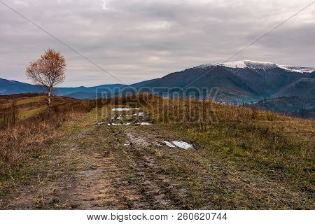 Birch Tree In Red Foliage Along The Dirt Road Through The Hill. Overcast Sky Above The Distant Mount