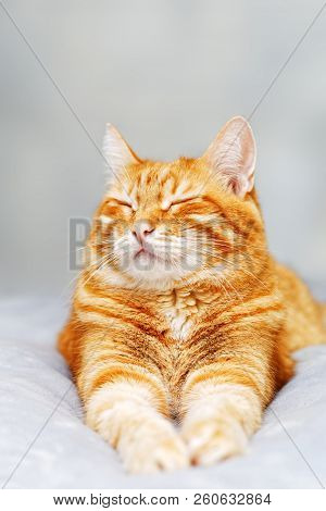 A ginger cat lays on the bed and sleeps with closed eyes and pulling out the front paws. Shallow focus and grey blurred background. poster