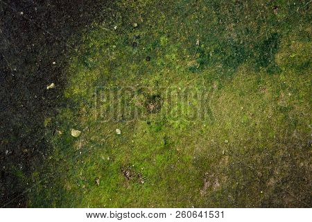 Green Moss Texture In Nature Green Moss On Cement Background.