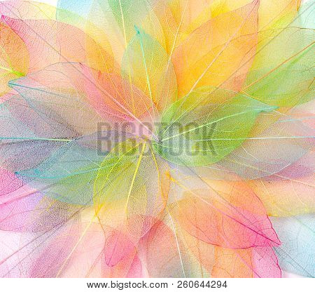 Colored Leafs. Leaf Texture Pattern. Macro Leaves Background Texture. Floral Design. Leaves. Rainbow