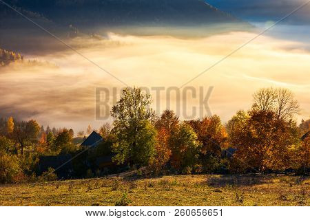Glowing Fog In The Rural Valley. Beautiful Autumn Scenery In Mountains. Trees In Red And Yellow Foli