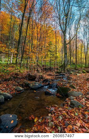 Brook Among Stones And Foliage In Forest. Beautiful Autumn Scenery On A Bright Day