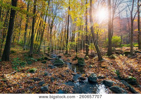 Beautiful Sunny Scenery In Autumn Forest. Lots Of Foliage On The Ground Around Stones And Brook