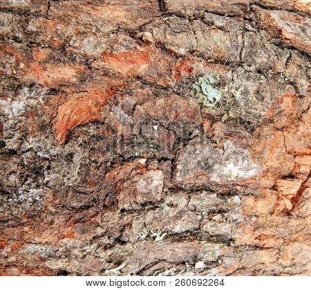Closeup Of Tree Trunk Color Image Stock Photos