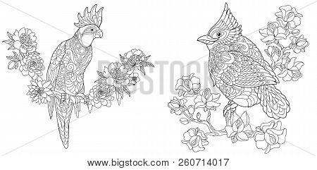 Coloring Pages. Coloring Book For Adults. Colouring Pictures With Cockatoo And Red Cardinal Bird. An