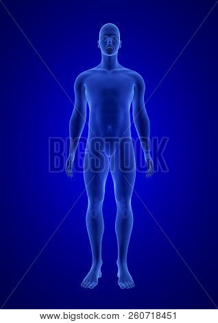 Blue Human Anatomy Body 3d Scan Render On Blue Background