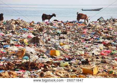 Dump on the beach of Socotra Island ???? man-made environmental disaster poster