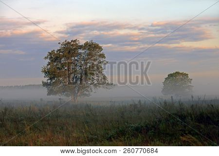Beautiful Morning Landscape Of Trees In The Fog, Two Trees In The Field Covered With Fog On The Back