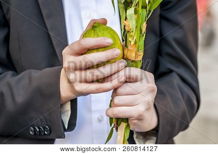 Hands Of A Caucasian Man Holding A Traditional Set Of Four Species For The Jewish Sukkot Holiday: Et