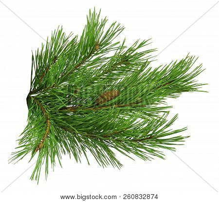 Nature Symbol Of Christmas And New Year Isolated On White Background. Green Pine, Conifer Tree. Pine