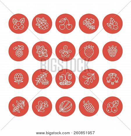 Forest Berries Flat Line Icons - Blueberry, Cranberry, Raspberry, Strawberry, Cherry, Rowan Berry Bl