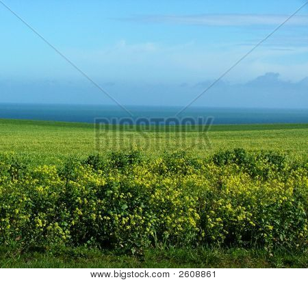 Background Field And Ocean