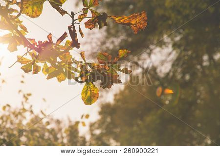 Autumn Leaves Vintage  Background. Autumn Background Nature. Fall Background Vintage Photo. Yellow L