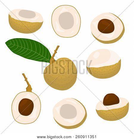 Vector Icon Illustration Logo For Whole Ripe Fruit Yellow Longan, Slice Half Dimocarpus. Longan Patt