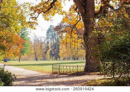 Large Glade In The City Park Covered With Grass Among Of Conifers And Deciduous Trees With Old Oak O