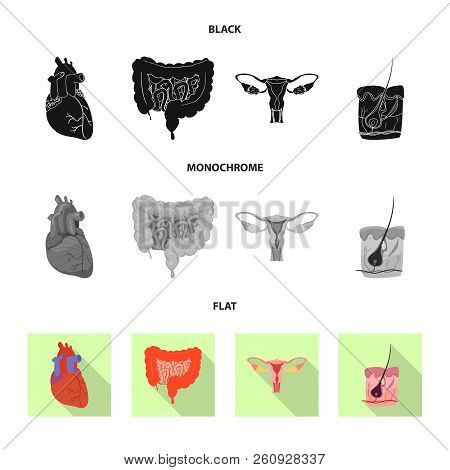 Vector Design Of Body And Human Logo. Set Of Body And Medical Stock Vector Illustration.
