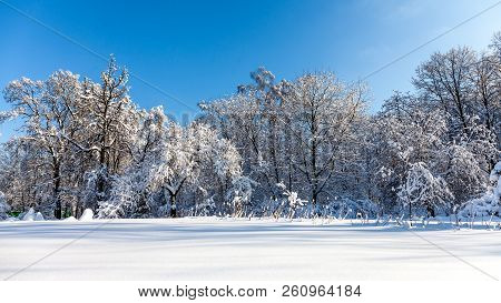 Winter Forest Snowy Landscape. Beautiful Snow Covered Nature Plants, Blue Sky Background, Sunny Weat