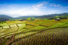 Rice Fields And Terraces At Blue Sky Cloud Cloudy Landscape