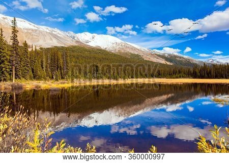 Light clouds reflected in the smooth water. Shallow bog overgrown with yellowed grass at the foot of Lake Peyto. Autumn trip to the Rockies of Canada. The concept of active, eco and photo tourism