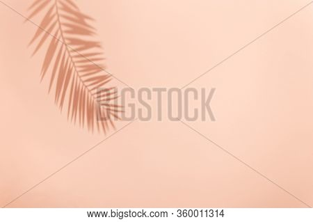 Palm Leaf Shadow On Vivid Pink Background. Minimal Summer Concept With Tropical Shadows. Creative Ab